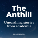 The Anthill - The Conversation