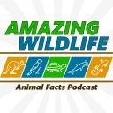 Amazing Wildlife - Amazing Wildlife